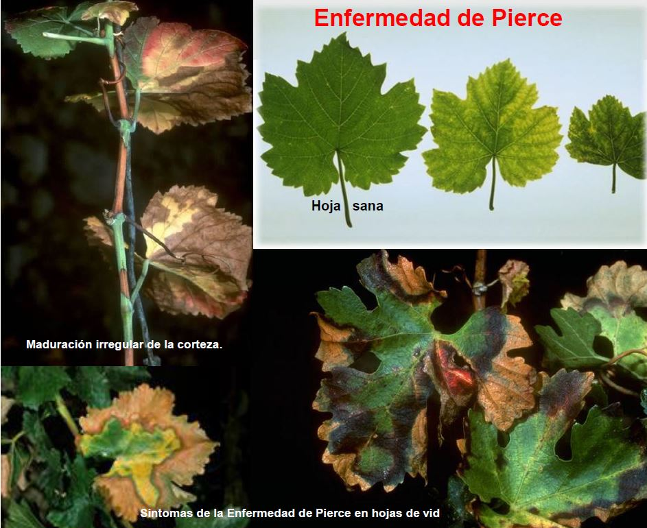 pierce3